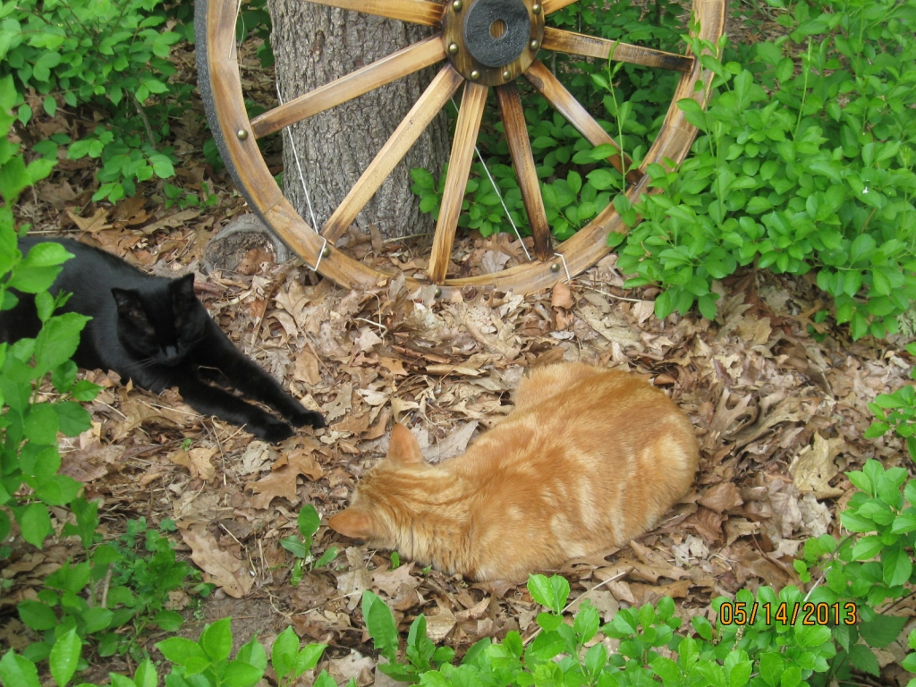 Cats commonly get Tapeworms from hunting while outside? Manchester Veterinary Clinic ? CT