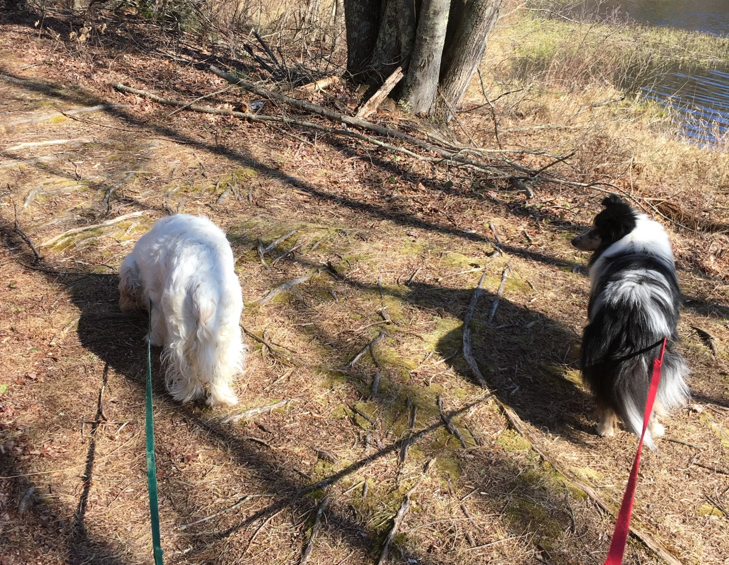 Carlisle and Fizzgig in the woods - Manchester Veterinary Clinic - CT