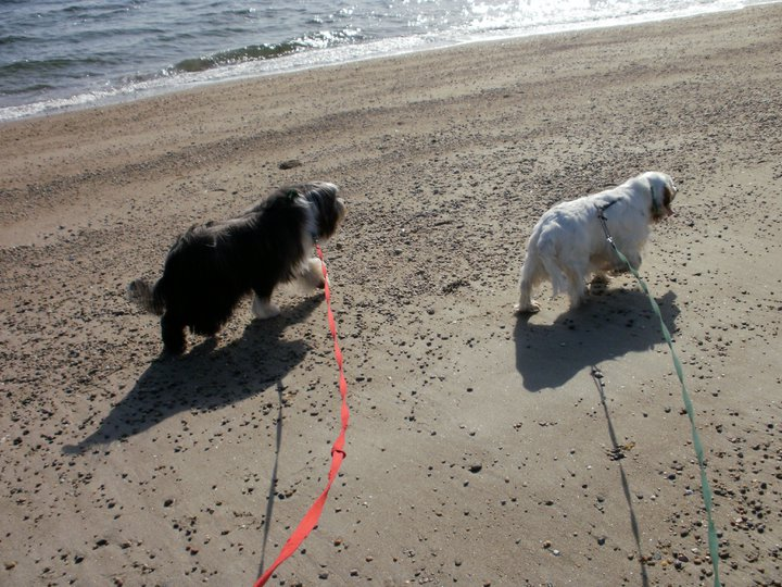 Carlisle and Rosie on the beach - Manchester Veterinary Clinic - CT