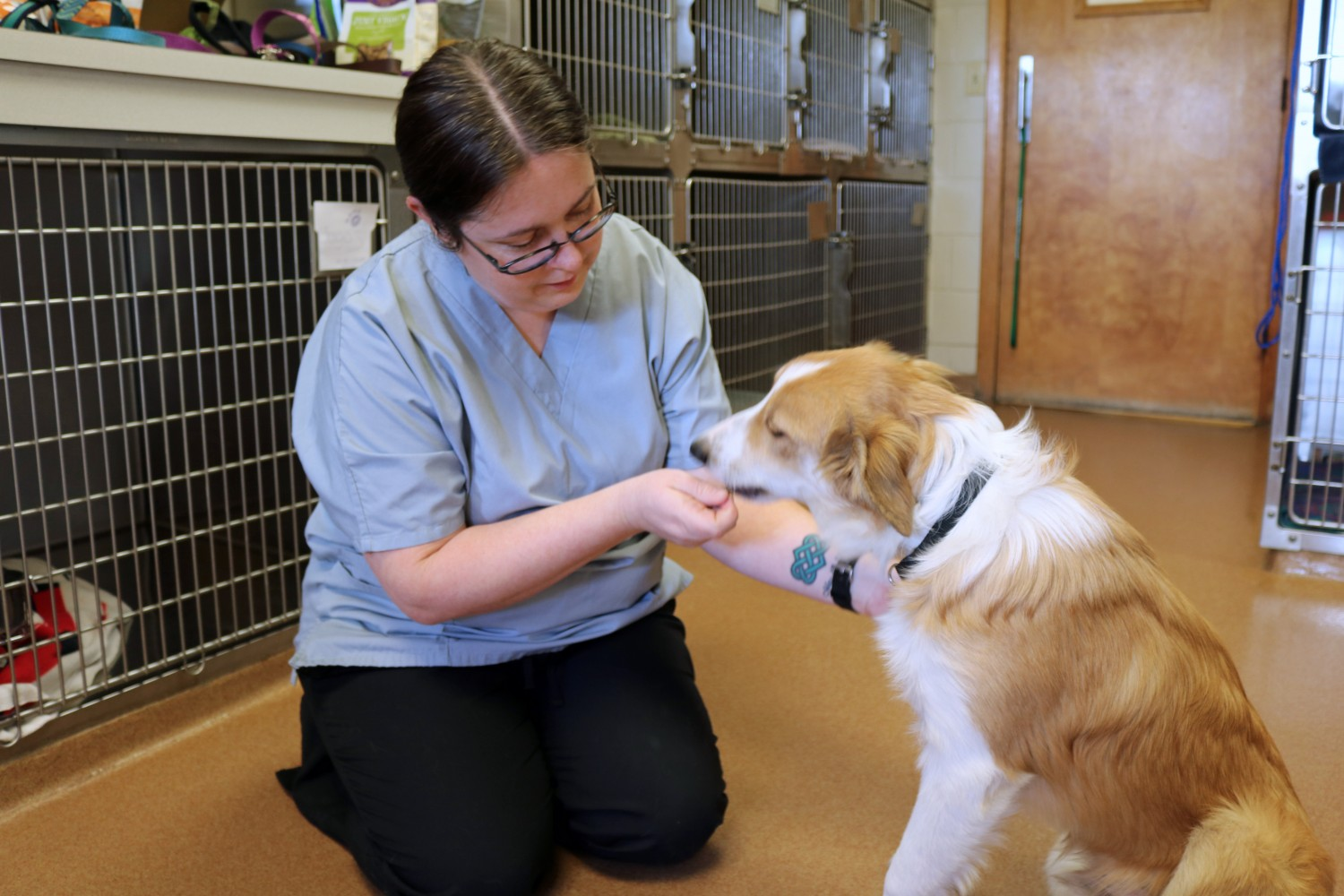 Toni, one of our many crossed trained nurses giving a nervous dog some treats to make him feel better - Manchester Veterinary Clinic - CT - Trusted Vets For Your Pets