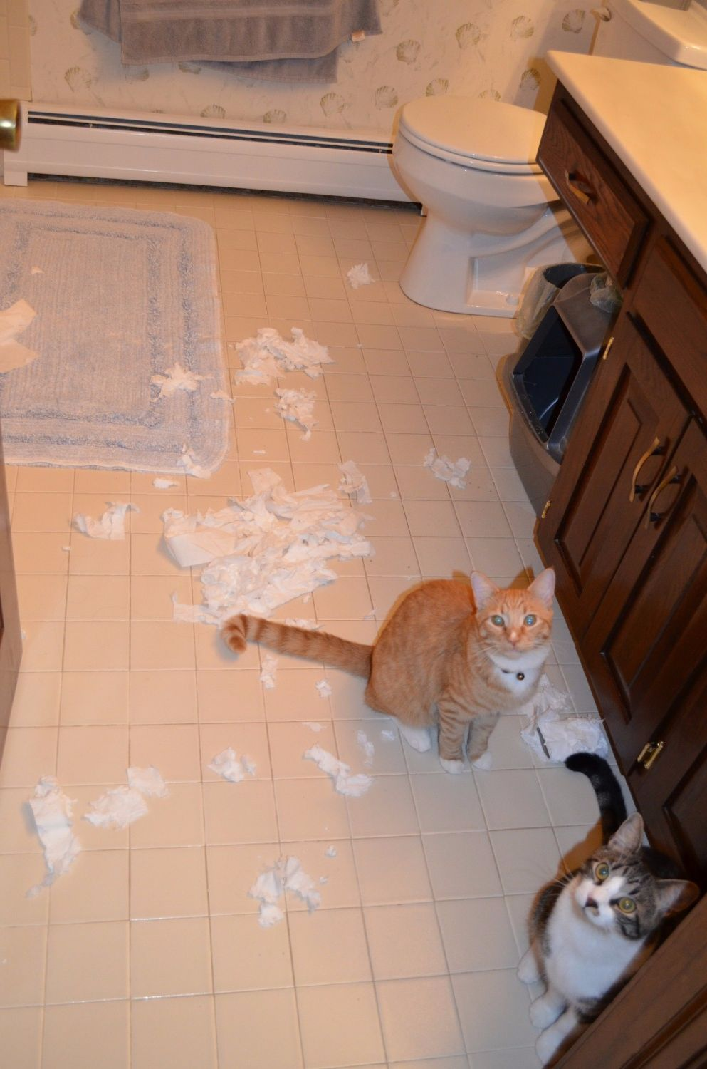 "Aftermath of a toilet paper festival.  ""It wasn't us!"" - Trusted Vets For Your Pets - Manchester Veterinary Clinic - CT"
