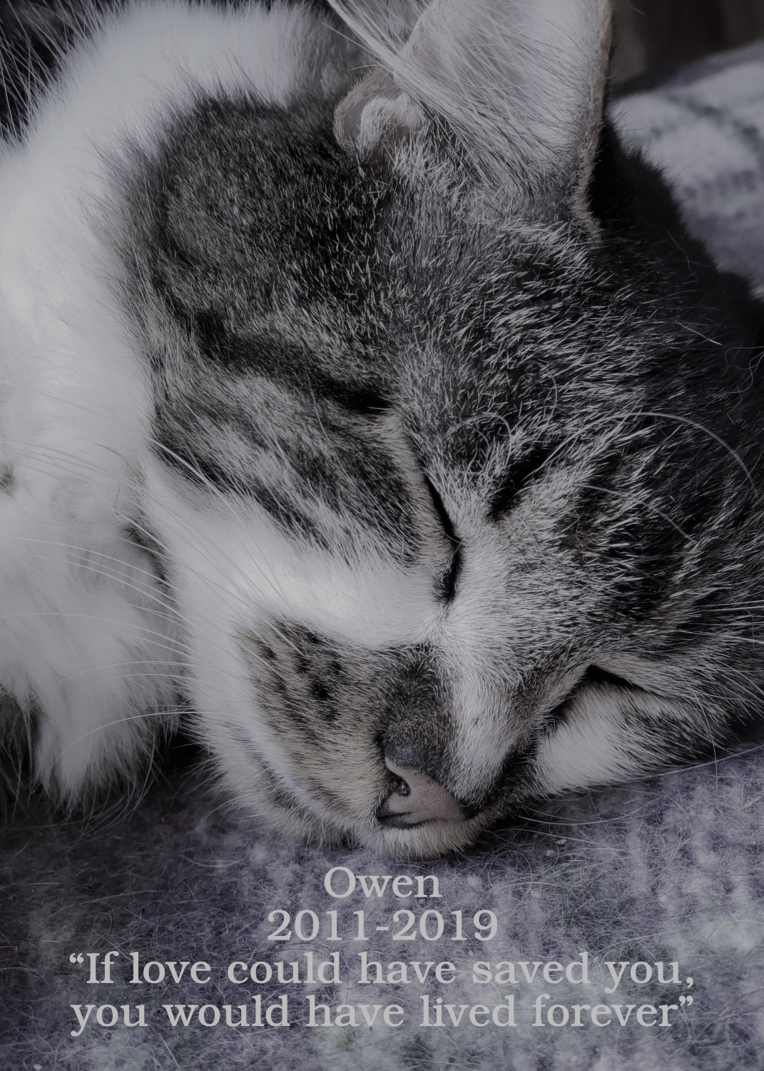 Owen - Manchester Veterinary Clinic - CT